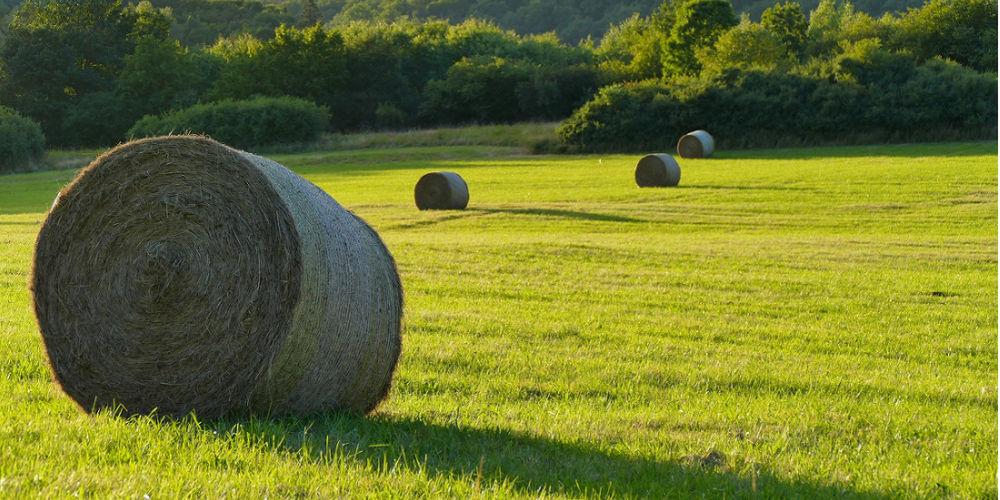 Massey Ferguson Farming Equipment In SA | AgriMag