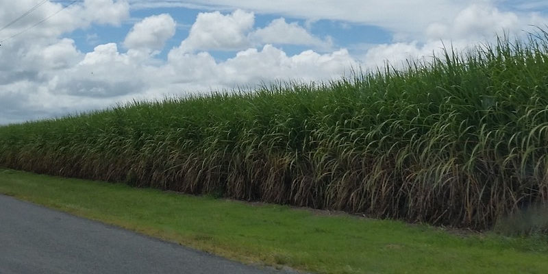 Sugar Cane Irrigation In South Africa | AgriMag