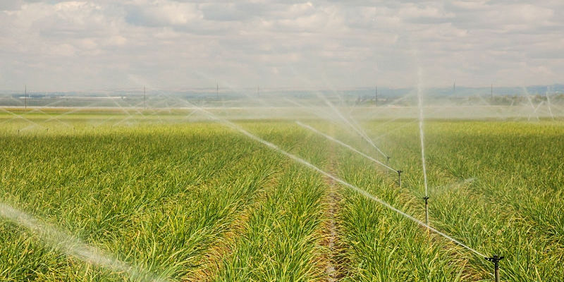 Sugar Cane Irrigation Systems | Irrigation Systems For Sale On AgriMag